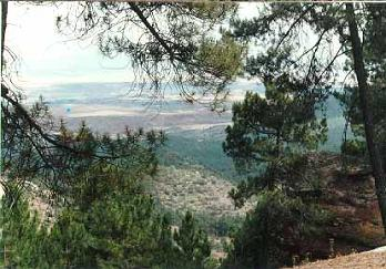 ALBARRACIN pinares de Rodeno